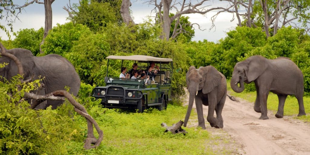safari por áfrica