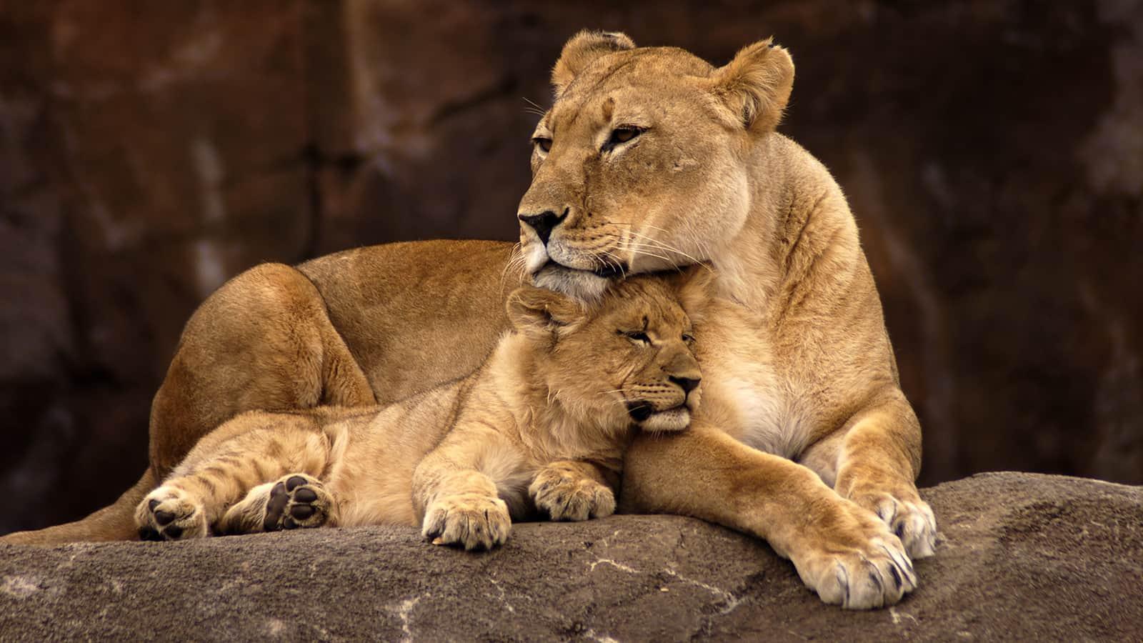 Cosas que debes saber antes de ir a tu primer safari