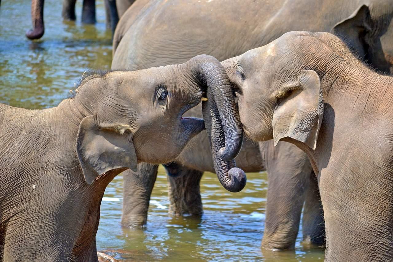 parque de udawalawe, elefantes en sri lanka
