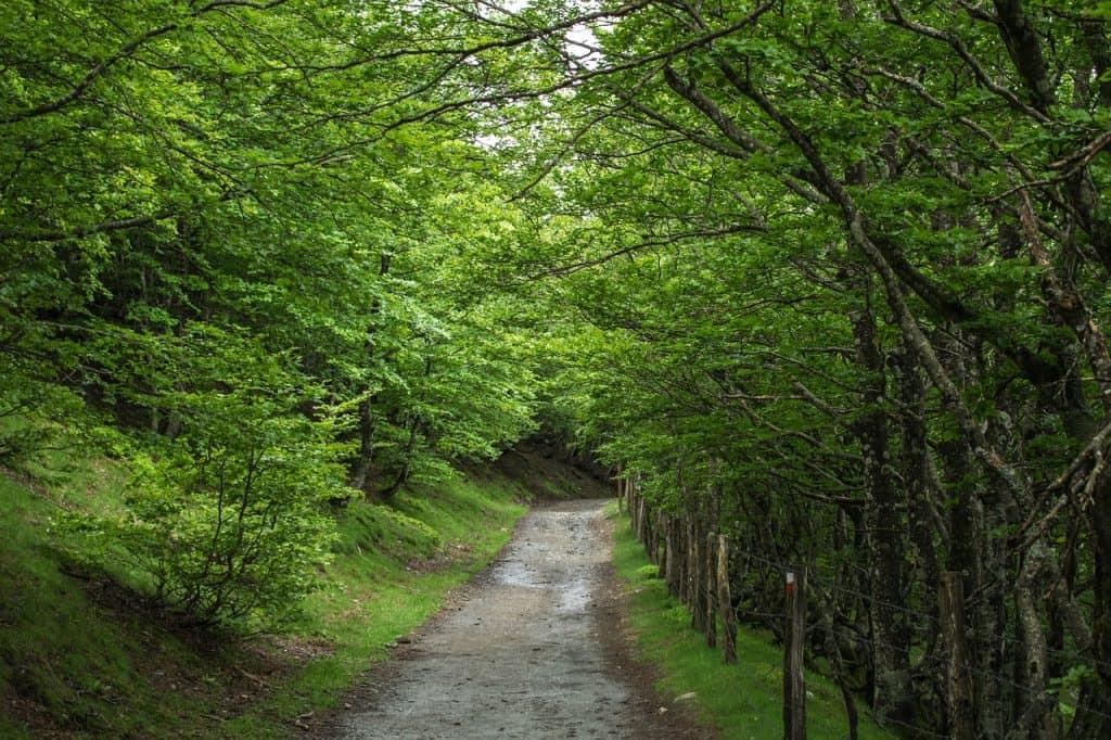 paisajes-camino-de-santiago
