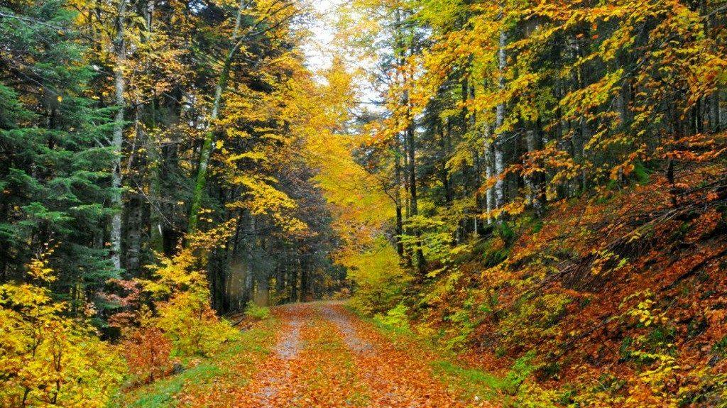 selva de irati paisajes de otoño