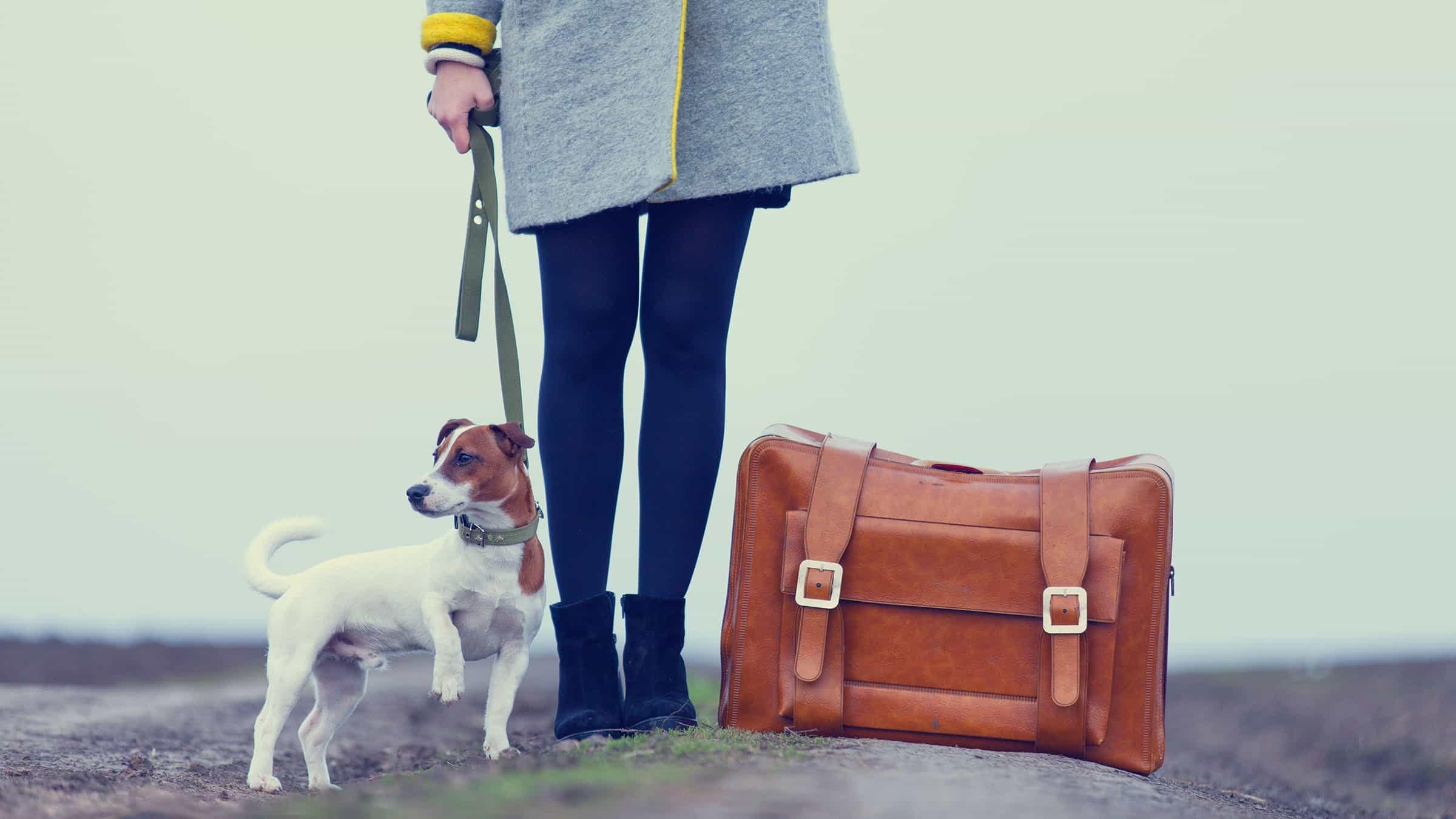 La mejor manera de Viajar con tu mascota