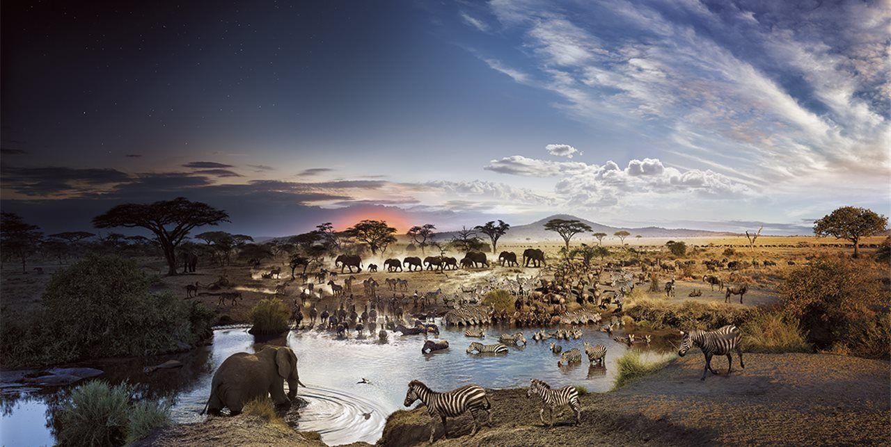 parque nacional serengeti