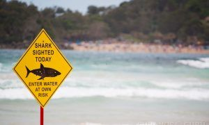 playa-aviso-tiburones