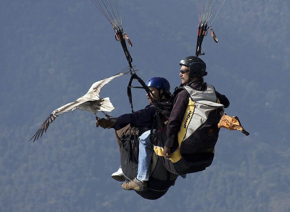 El vuelo del halcón, Nepal