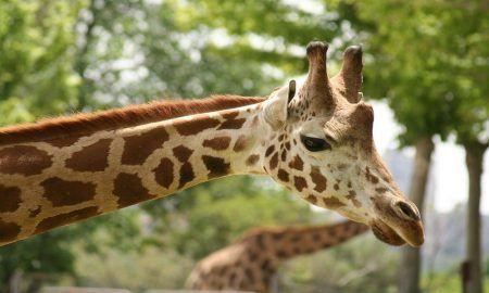 mejores zoológicos de España