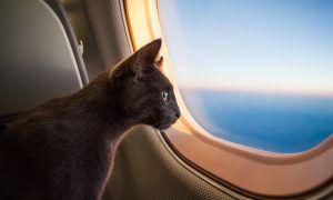 Viajar en avión con tu gato