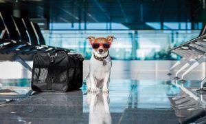 Viajar con perro en avión, esto es todo lo que debes saber