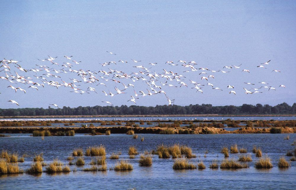 visitar el Parque Nacional y Natural de Doñana