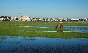Descubre el precioso Parque Nacional y Natural de Doñana