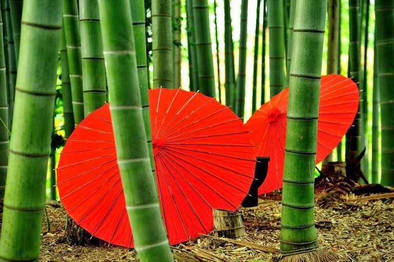 Kioto, qué ver y hacer