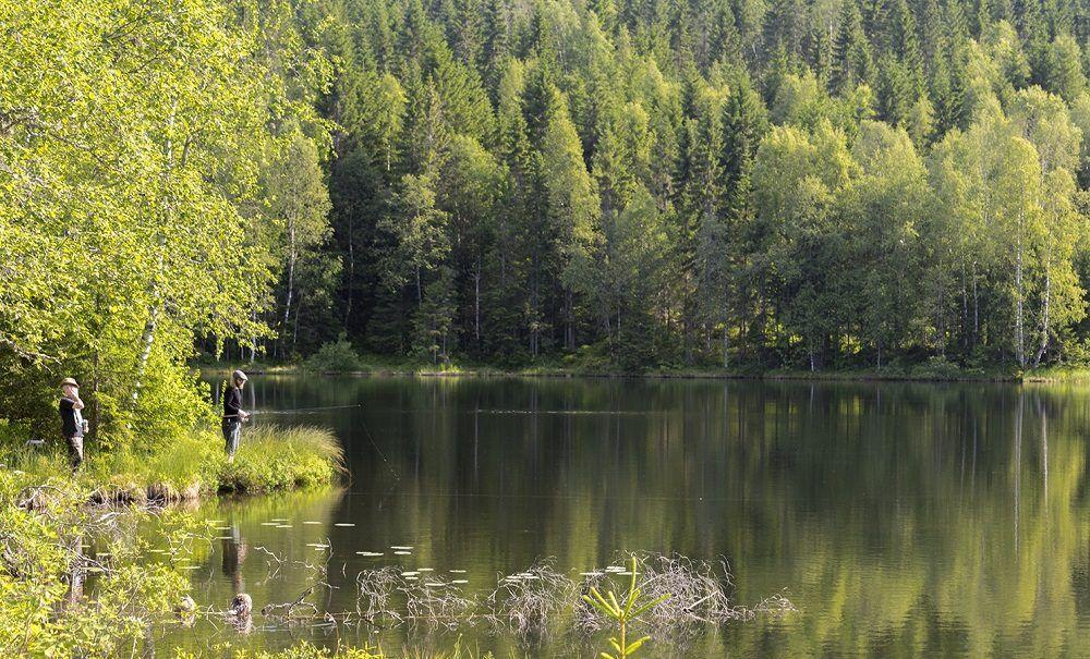 Bosque de Nordmarka