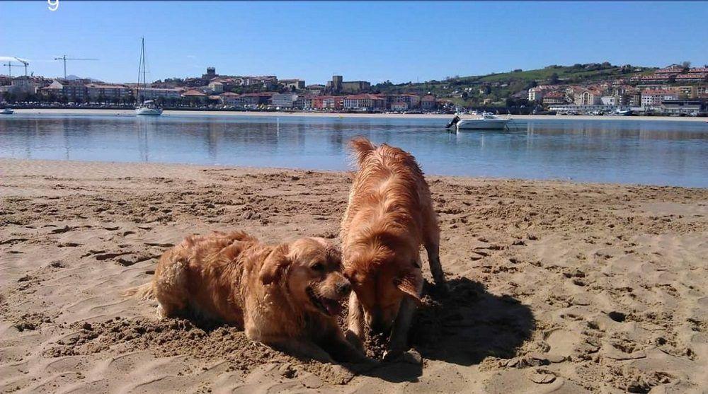 playa de perros en Galicia