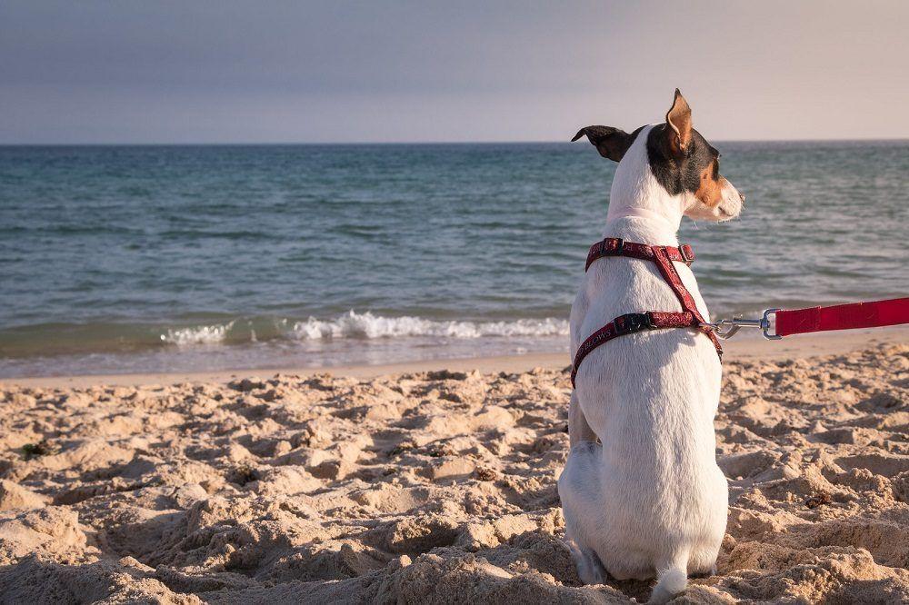 playa de perros en Alicante