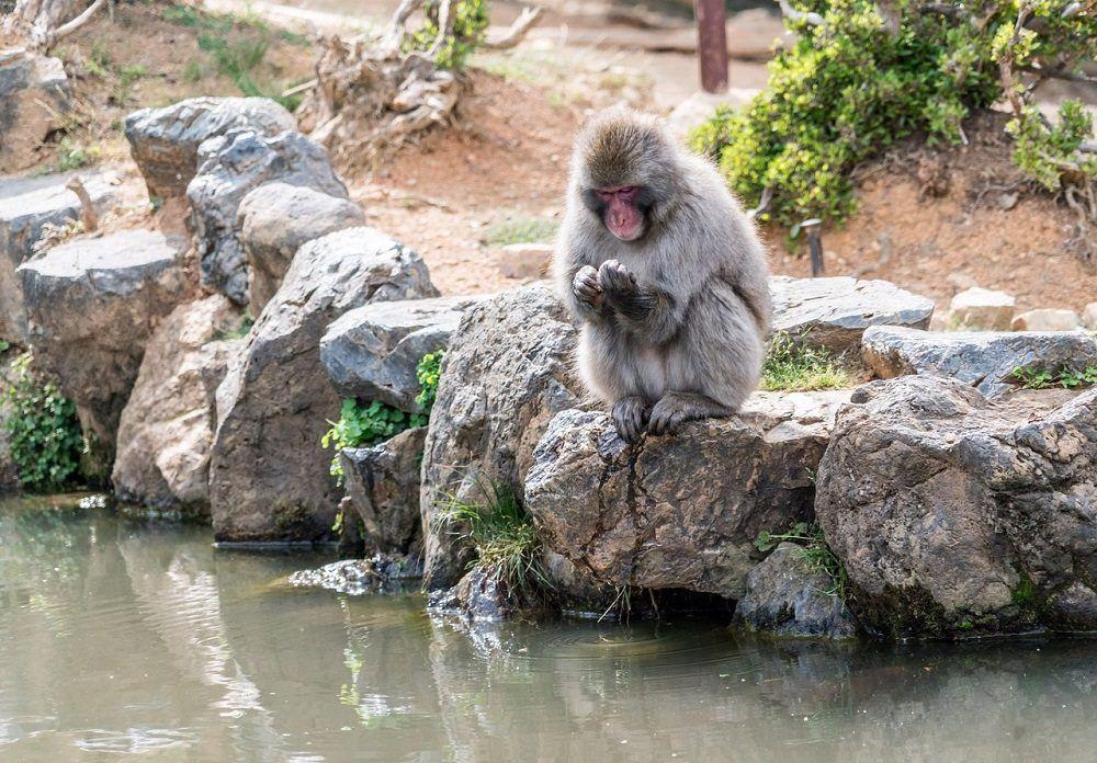 Parque de los macacos de Arashiyama