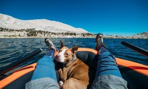 Viajar con tu perro: todo lo que debes saber para que salga bien