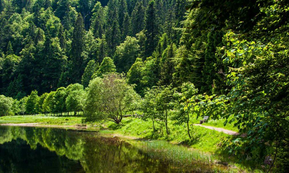 Pueblos con encanto de la Selva Negra en Alemania