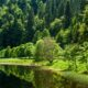 Pueblos de cuento en la Selva Negra que puedes y querrás visitar