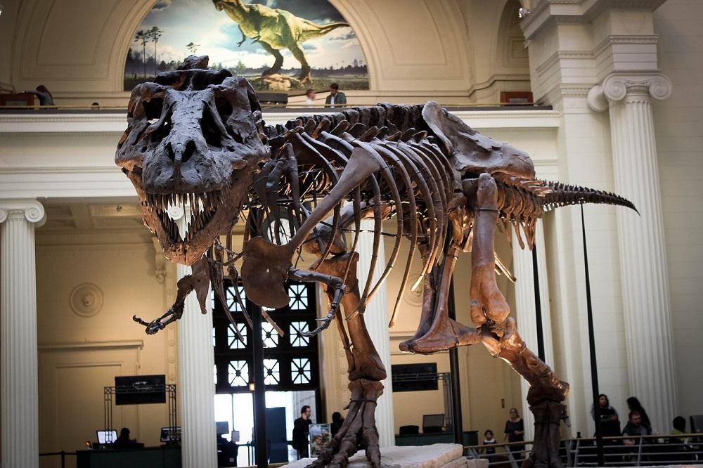 El T-Rex de The Field Museum