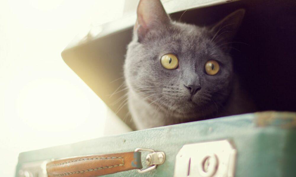 Consejos para viajar con gatos y que no sea una pesadilla